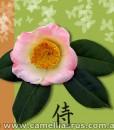 Sakura-Tsukasa